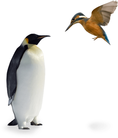 penguin and kingfisher